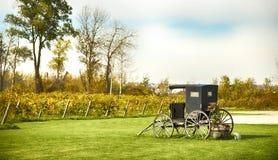 Landscape of vineyard, nature background. Autumn season Royalty Free Stock Photography