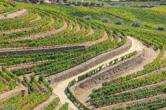 Landscape of vineyard stock photos