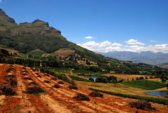 Landscape with vineyard(South Africa) Royalty Free Stock Photo