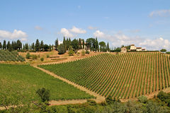 Landscape with vineyard in the Tuscany, Italy. On sunny day stock images