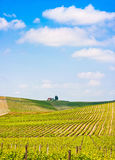 Landscape with vineyard in Tuscany, Italy. Scenic Tuscany landscape with vineyard in the Chianti region, Tuscany, Italy royalty free stock photography