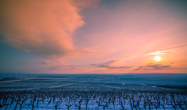 Landscape with vineyard in the winter Royalty Free Stock Photo