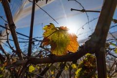 Landscape of vineyards Royalty Free Stock Photography