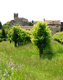 Landscape with vineyards and castle Stock Images