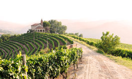 Landscape with vineyards and church Stock Photo