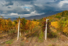 Landscape with vineyards and dark skies at fall season on Crimean peninsula Royalty Free Stock Photo