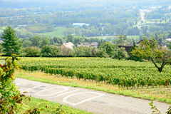 Landscape of vineyards Stock Photos
