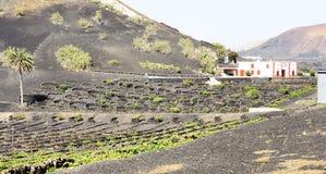 Landscape of vineyards in La Geria Royalty Free Stock Photos