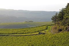 Landscape of vineyards near of Auxerre Royalty Free Stock Photo