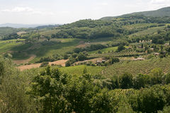 Landscape with vineyards near Montepulciano Royalty Free Stock Photo