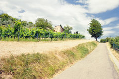 Landscape of vineyards near the road in the summer of Tuscany Royalty Free Stock Photos