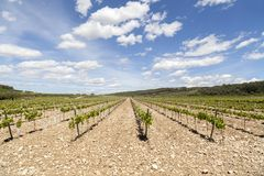 Landscape with vineyards in Penedes wine area, Catalonia, Spain. stock images