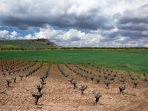 Landscape with vineyards. In spring in southern Spain royalty free stock photography
