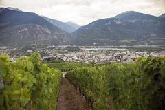 Landscape with vineyards in the the swiss county of wallis or valais. Landscape with vineyards in the the swiss canton of wallis or valais near sierre and sion royalty free stock image