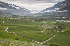 Landscape with vineyards in the the swiss county of wallis or valais. Landscape with vineyards in the the swiss canton of wallis or valais near sierre and sion stock photos