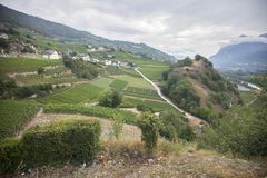 Landscape with vineyards in the the swiss county of wallis or valais. Landscape with vineyards in the the swiss canton of wallis or valais near sierre royalty free stock images