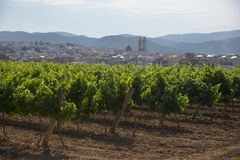 Landscape with vineyards. View on the city Sant Pere de Ribes, Garraf, province Barcelona, Catalonia Royalty Free Stock Photos