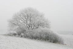 landscape vintern Royaltyfri Bild