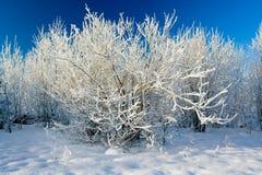 landscape vintern Royaltyfri Foto