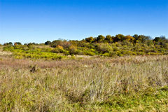 Landscape at Virginia Arboretum. Beautiful early autumn landscape at the Virginia State Arboretum -- Blandy Experimental Farm Stock Photography