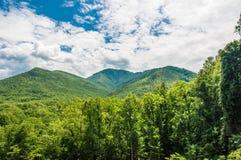 Landscape, vista, forest in summer. Royalty Free Stock Image