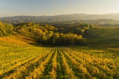 Landscape vith vineyards Stock Image