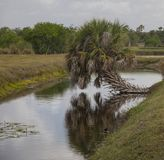 Landscape in Wakodahatchee Wetlands Royalty Free Stock Image
