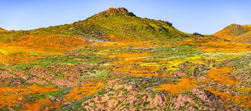 Landscape in Walker Canyon during the superbloom, California poppies covering the mountain valleys and ridges, Lake Elsinore,. South California stock image