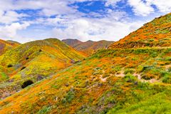 Landscape in Walker Canyon during the superbloom, California poppies covering the mountain valleys and ridges, Lake Elsinore,. South California royalty free stock photo
