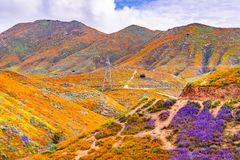 Landscape in Walker Canyon during the superbloom, California poppies covering the mountain valleys and ridges, Lake Elsinore,. South California stock photography