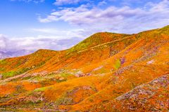Landscape in Walker Canyon during the superbloom, California poppies covering the mountain valleys and ridges, Lake Elsinore,. South California royalty free stock image