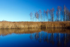 Landscape with water and birches Royalty Free Stock Photography