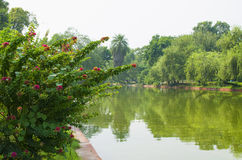 Landscape of the water channel with plants and flowers Royalty Free Stock Images