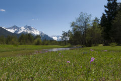Landscape with water, flowers, grass, meadows Royalty Free Stock Images