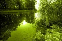 Landscape with water and grass and sunlight flashing tinted green color. Water and grass and sunlight flashing tinted green color Stock Photos