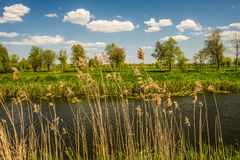 Landscape with water, meadows and trees Stock Images