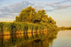 Landscape with water and vegetation in the Danube Delta. Romania Royalty Free Stock Images