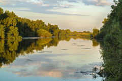 Landscape with water and vegetation in the Danube Delta. Romania Royalty Free Stock Photography