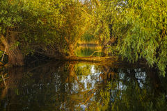 Landscape with water and vegetation in the Danube Delta Royalty Free Stock Photography