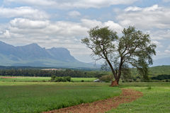 Landscape waterberg, South Africa Royalty Free Stock Images