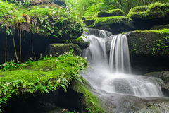 Landscape of waterfall in deep rain forest of Bolaven Plateau, C Stock Photo