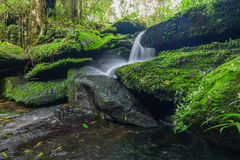 Landscape of waterfall in deep rain forest of Bolaven Plateau, C Stock Images