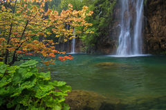 Landscape with waterfall and red tree Stock Images