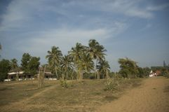 Landscape on the way to the sea with beautiful palm trees, Villa and tourists in the distance stock photos