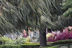 Weeping Willow Tree. Landscape with Weeping Willow Tree stock image