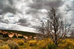 Landscape of West Stock Image