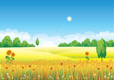 Landscape with wheat. And sunflowers Stock Image