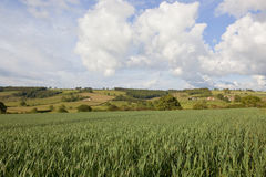 Landscape with wheat field Stock Photo