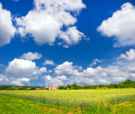 Landscape with wheat field and blue sky Stock Photo