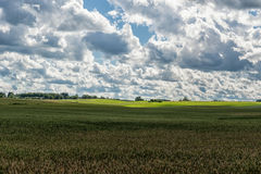 Landscape with Wheat Field and Cloudy Blue Sky in Background. Sunlight and Wide Shadows Area. Royalty Free Stock Images